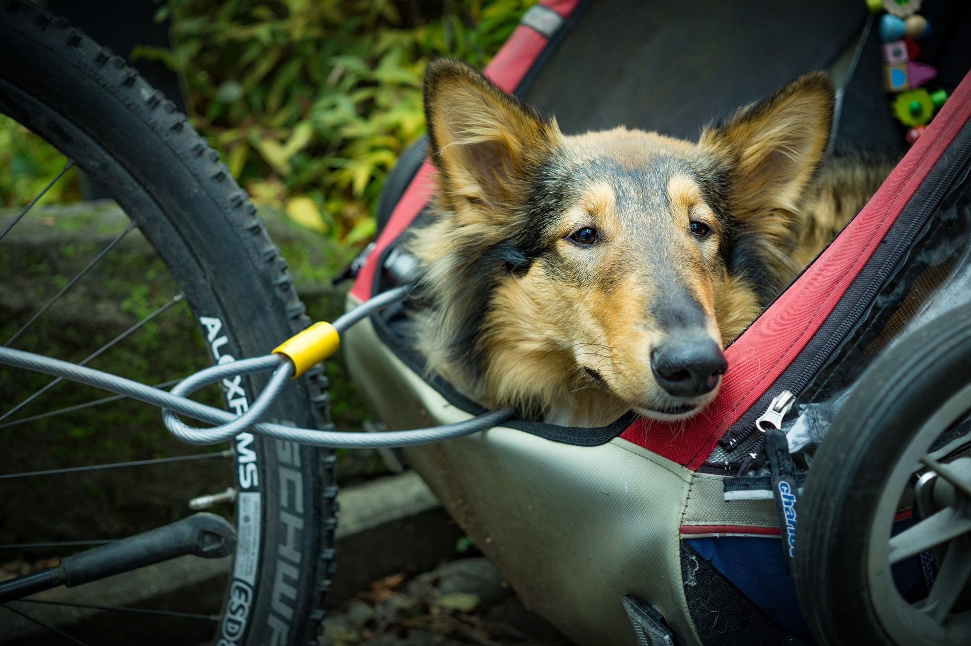 Radfahren bei gleichzeitiger Führung eines Hundes an einer Leine erhöht das Haftungsrisiko