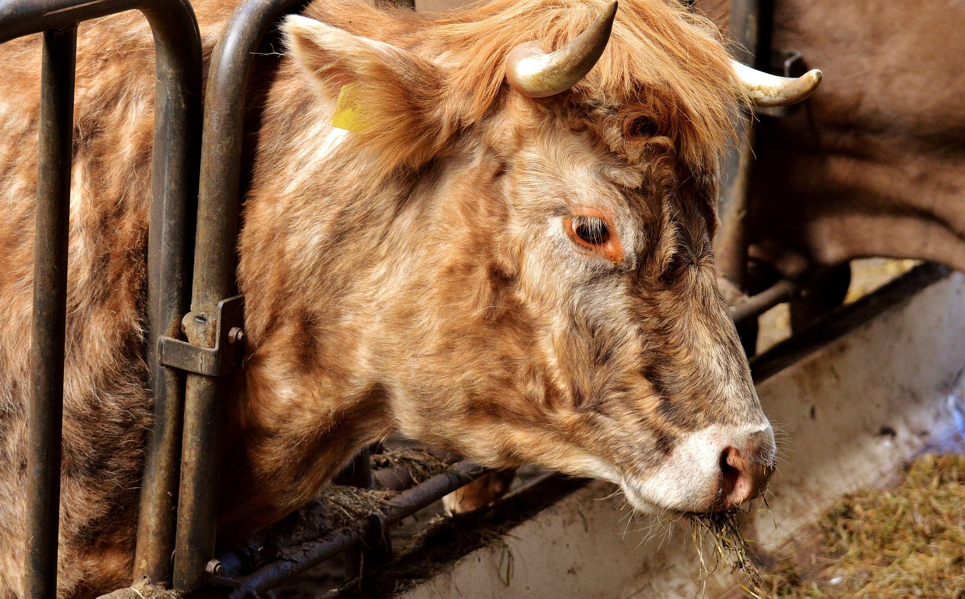 Tierschutz ist notstandsfähig
